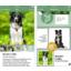 Microsoft julkaisi teko�lysovelluksen, joka tunnistaa koiria